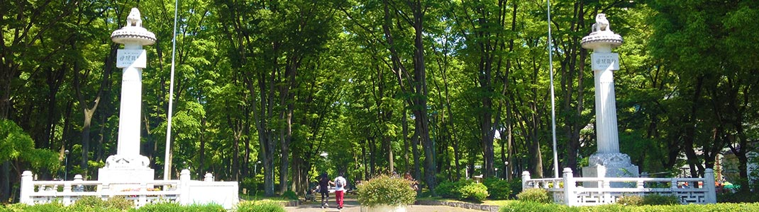 事務所の隣に広がる緑豊かなセントラルパーク